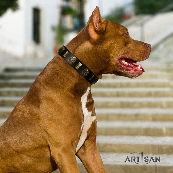 Pitbull comfy wearing full grain leather collar for your impressive pet