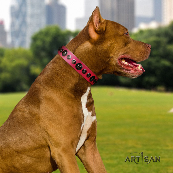 Pitbull perfect fit natural genuine leather dog collar with stunning embellishments