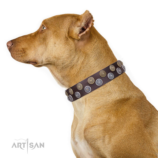 Pitbull leather collar with rust-proof hardware for fancy walking