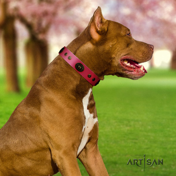 Pitbull fine quality full grain leather dog collar with unique adornments