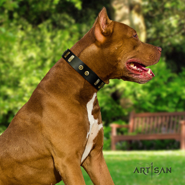 Pitbull handy use full grain leather collar for your attractive four-legged friend