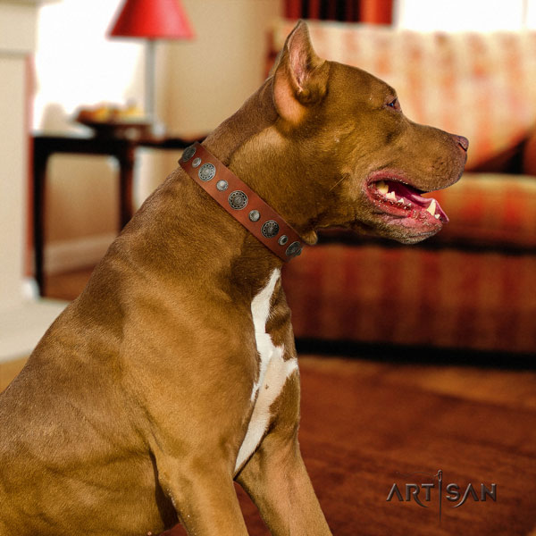 Pitbull comfortable full grain leather dog collar with exquisite embellishments