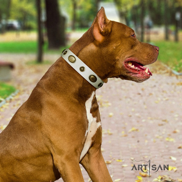 Pitbull convenient leather dog collar with awesome adornments