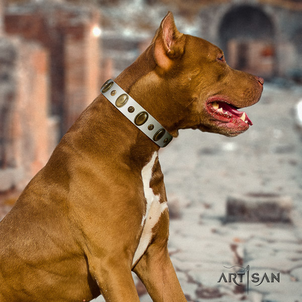 Pitbull everyday use genuine leather collar for your beautiful four-legged friend