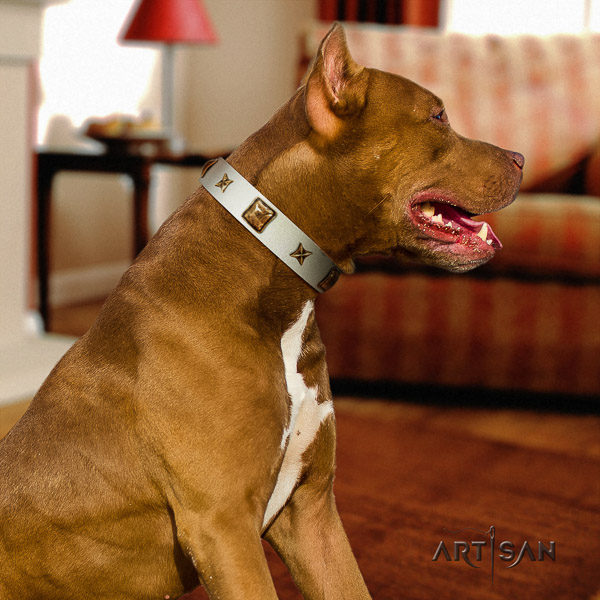 Pitbull handy use natural leather collar for your attractive four-legged friend