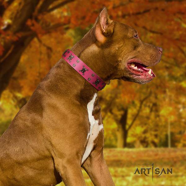 Pitbull basic training full grain leather collar for your lovely four-legged friend