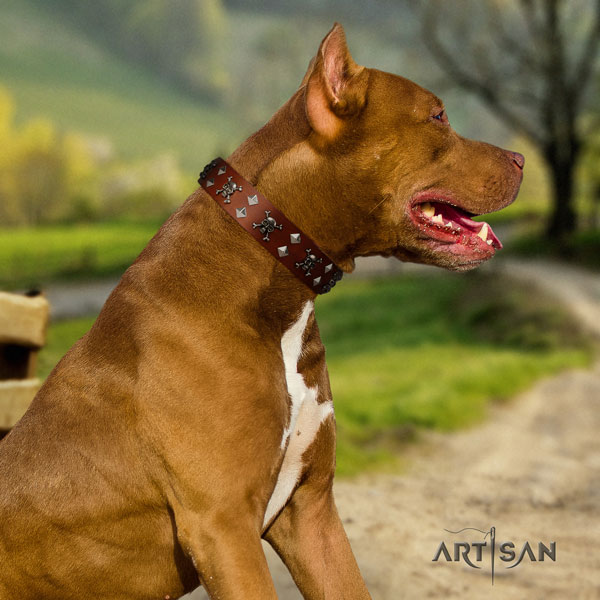 Pitbull convenient full grain genuine leather dog collar with inimitable decorations