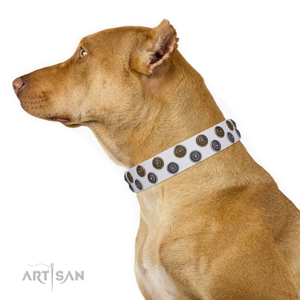 Pitbull natural genuine leather collar with corrosion resistant hardware for walking