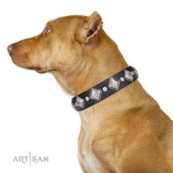 Pitbull genuine leather collar with corrosion proof hardware for walking