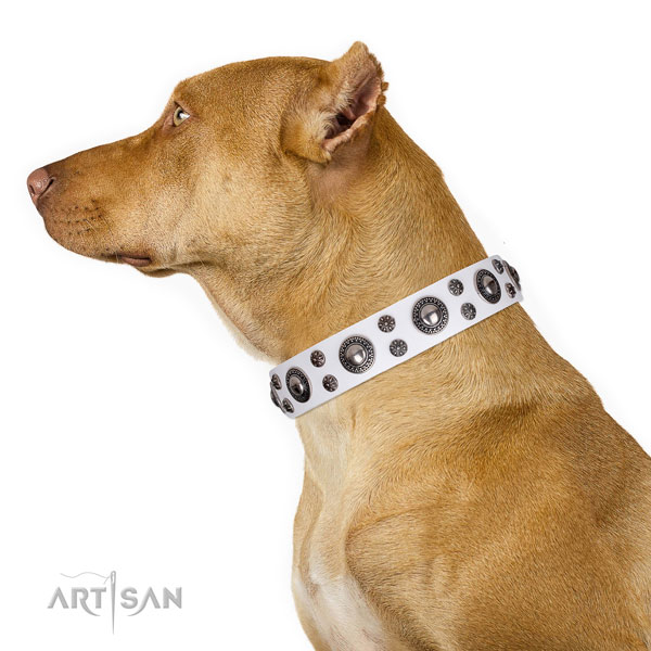 Pitbull natural genuine leather collar with reliable traditional buckle for basic training