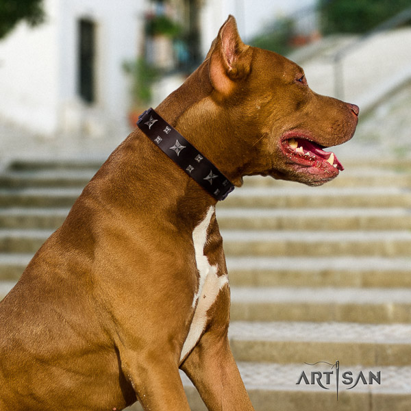 Pitbull comfy wearing full grain natural leather collar for your beautiful four-legged friend