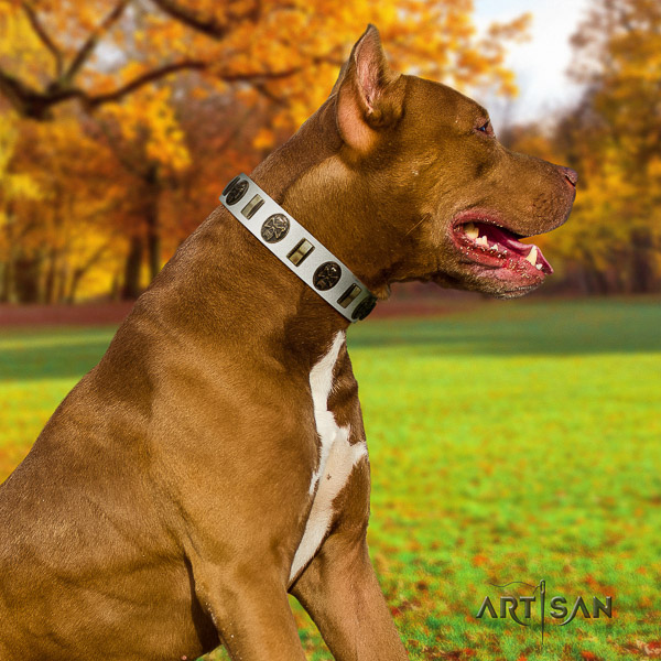Pitbull everyday use full grain genuine leather collar for your attractive four-legged friend