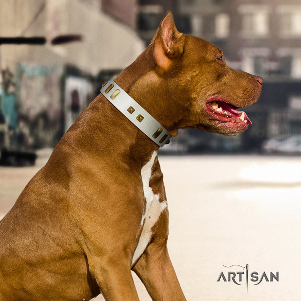 Pitbull daily walking leather collar for your lovely dog