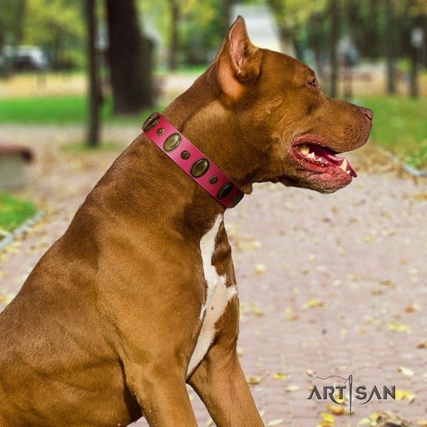 Pitbull fancy walking genuine leather collar for your impressive pet