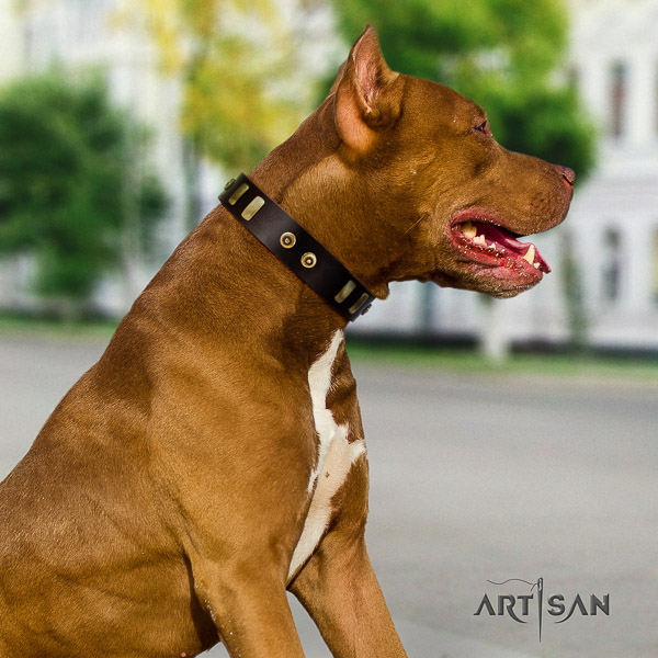 Pitbull daily walking full grain leather collar for your impressive doggie