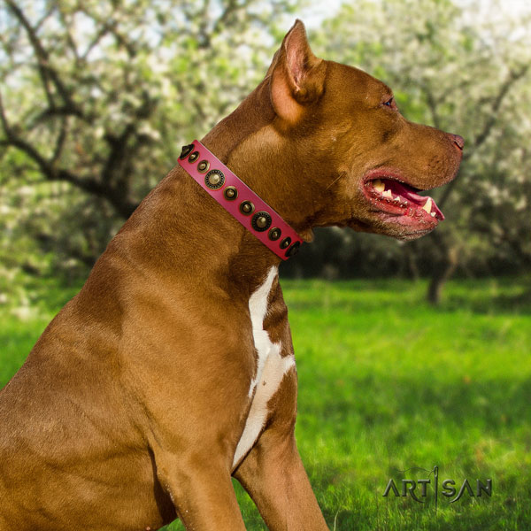 Pitbull easy to adjust full grain natural leather dog collar with unique adornments