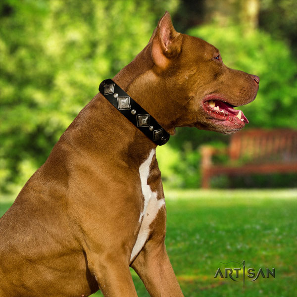 Pitbull handcrafted full grain leather dog collar with fashionable decorations