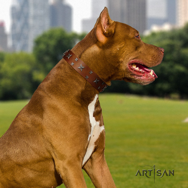 Pitbull comfortable wearing natural leather collar for your lovely canine