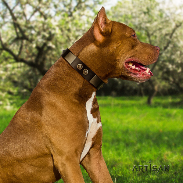 Pitbull daily walking full grain genuine leather collar for your attractive pet