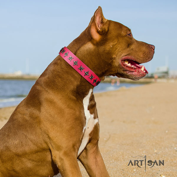 Pitbull handcrafted leather dog collar with unusual adornments