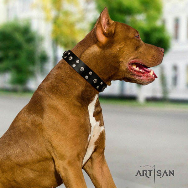 Pitbull adjustable natural genuine leather dog collar with impressive decorations