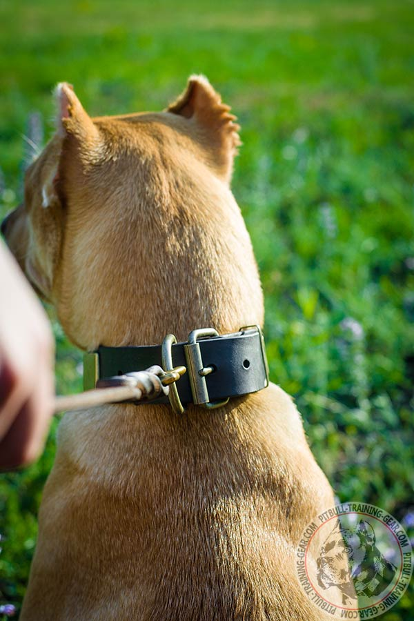 Pitbull brown leather collar easy-to-adjust with plates for utmost comfort