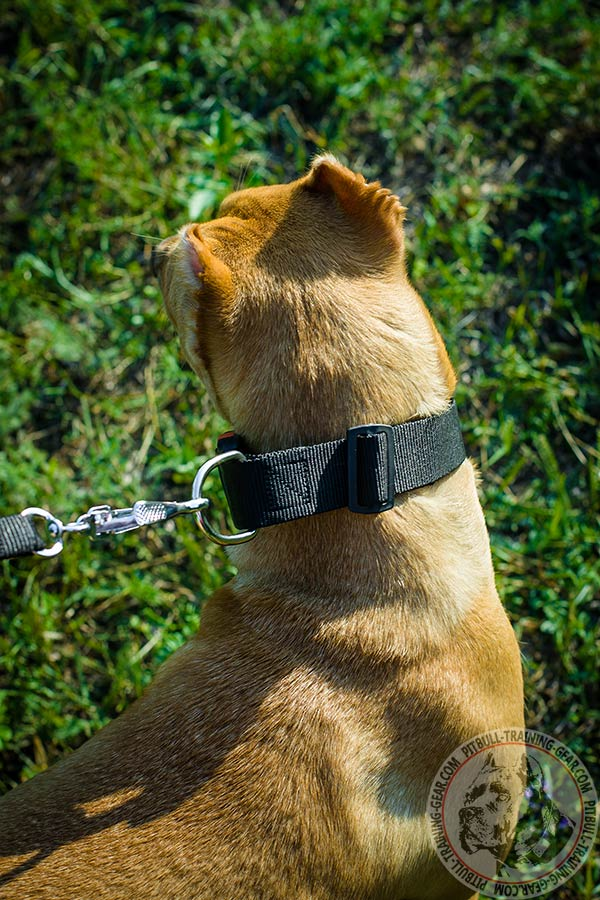 Pitbull nylon collar adjustable  quick release buckle for improved control