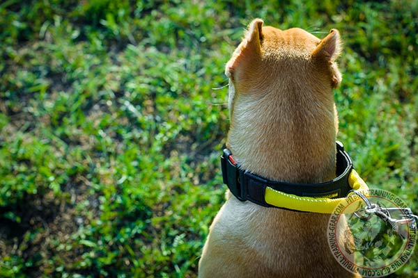 Pitbull nylon collar of lightweight material with d-ring for leash attachment for any activity
