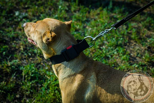 Pitbull nylon collar of lightweight material with nickel plated hardware for perfect control
