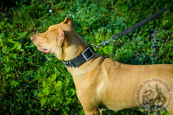 Pitbull nylon collar with reliable hardware for daily walks