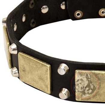 Vintage Plates and Pyramids on Fashionable Leather Dog Collar for Pitbull