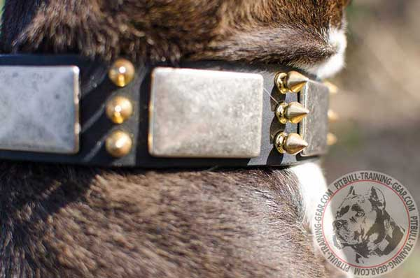 Plates and spikes adornment of walking leather dog collar