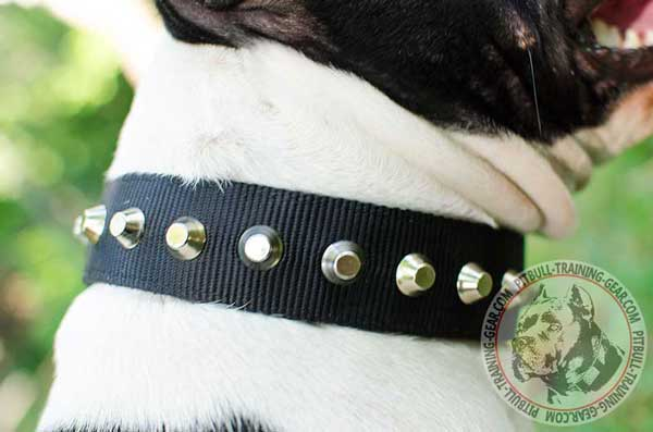 Gorgeous Pyramids on Adjustable Wide Nylon Pitbull Collar