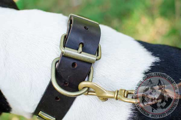 Durable Fittings on Leather Dog Collar for Pit Bull