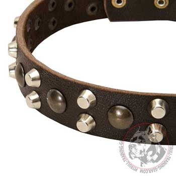 Rust Resistant Pyramids on Leather Pitbull Collar