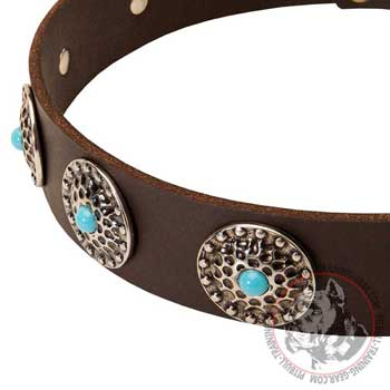 Fashion Leather Dog Collar for Pit Bull Decorated with Silver Conchos