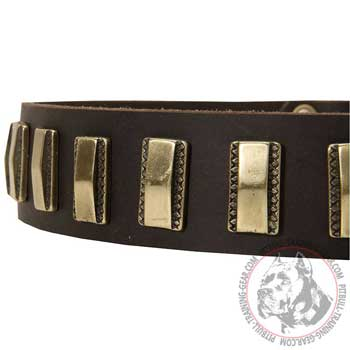 Small Brass Plates on Leather Dog Collar for Pit Bull