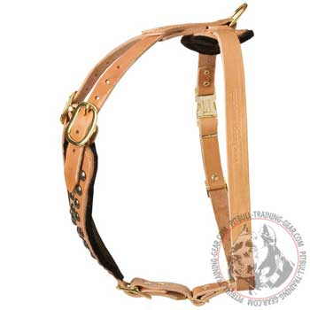 Leather American Pit Bull Terrier Harness with Strong Adjustable Straps