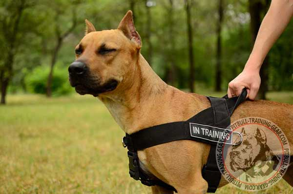 Nylon Training Harness for American Pit Bull Terrier With Front D-ring