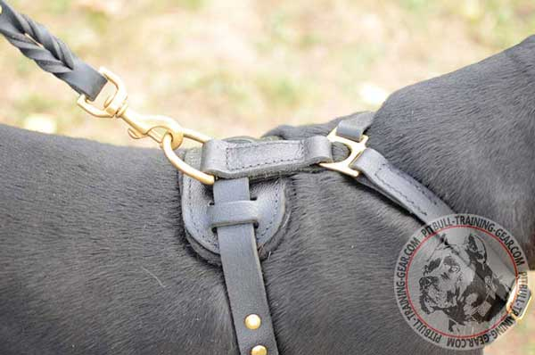 Wide D-Ring on Leather Adjustable Pitbull Harness