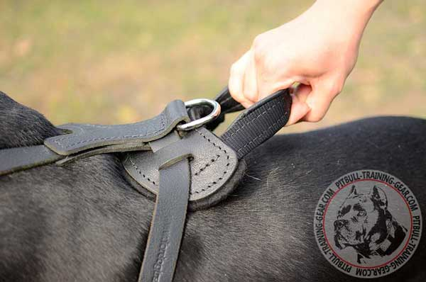 Comfy Handle on protection training leather dog harness