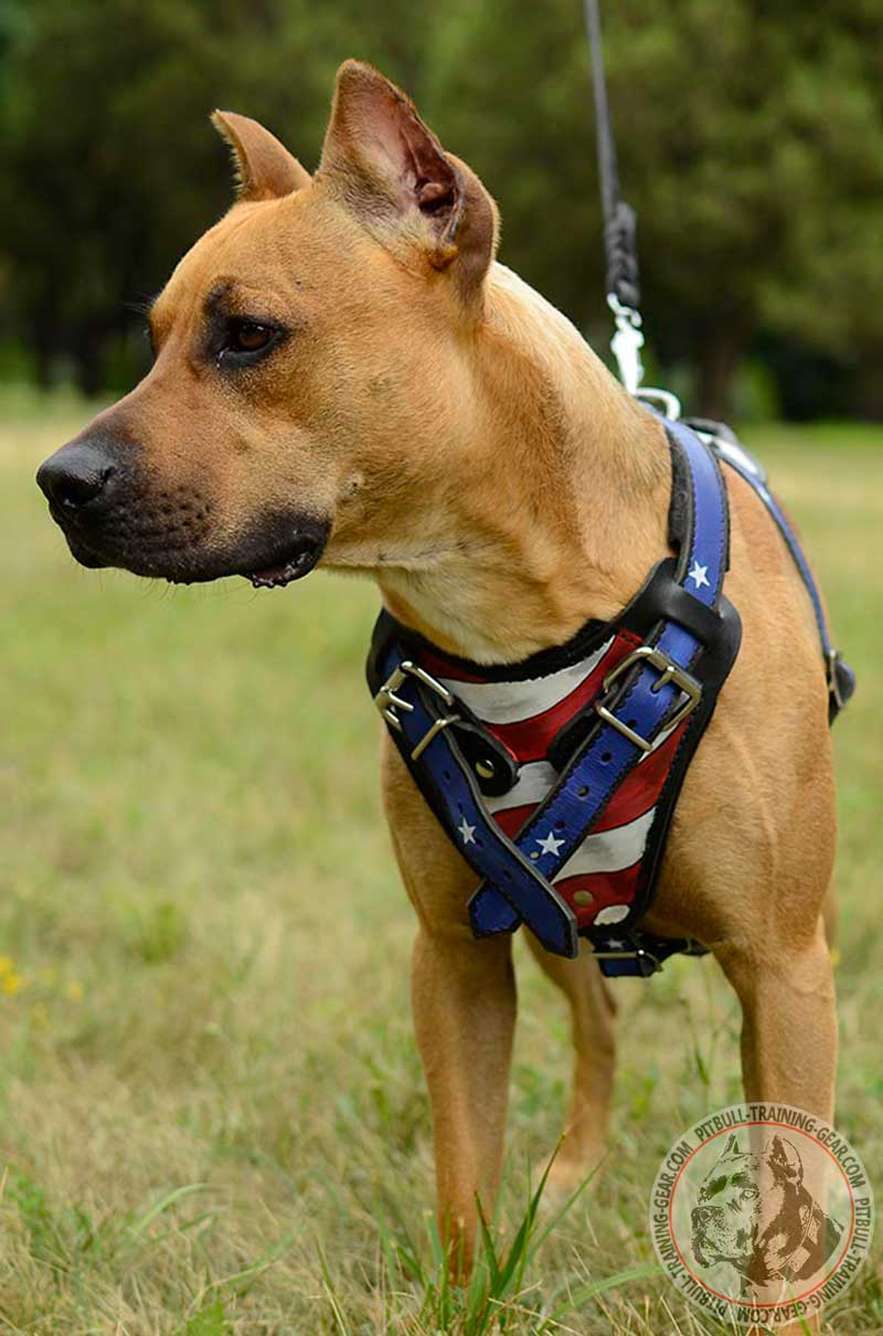 Buy Fashion Leather Pitbull Harness | Designer Walking Dog Gear