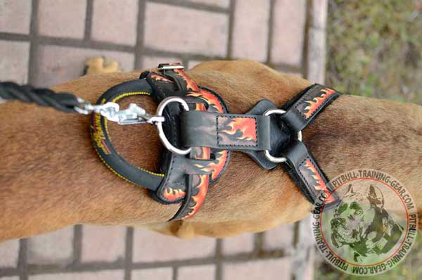 Heavy-Duty Nickel Plated Fittings on Leather Dog Harness