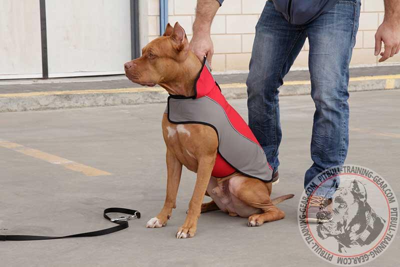 Buy Pitbull Nylon Coat For Winter Dog Harness