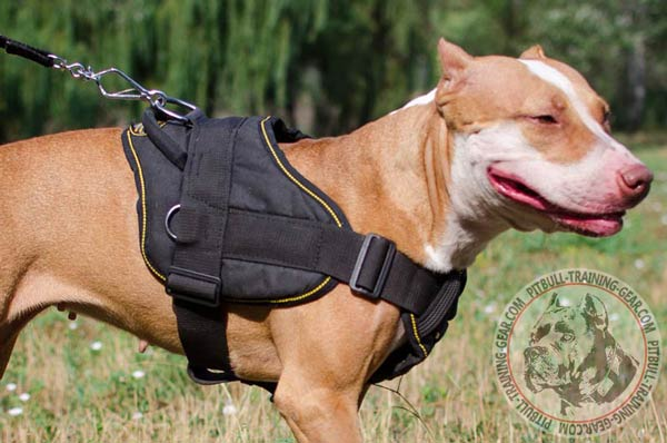Nylon Pitbull harness with adjustable straps