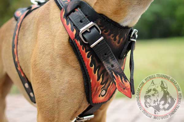 Soft Padded Painted Chest Plate on Leather Dog Harness