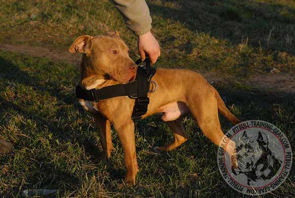 Universal Nylon Pit Bull Harness for Tracking/Pulling Work