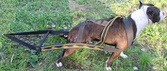 Easy-to-Use Nylon Pit Bull Harness for Weight Pulling