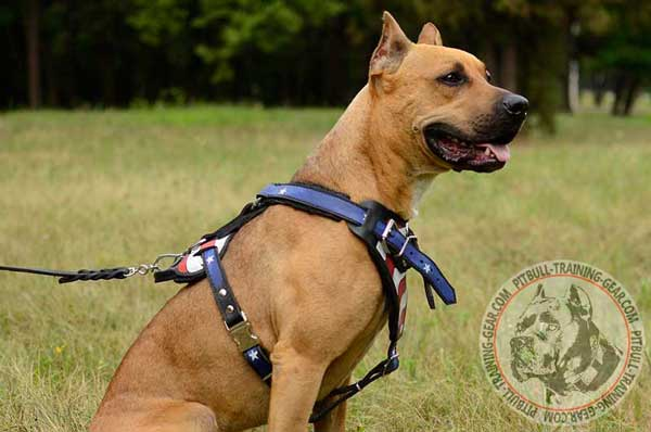 Handmade Walking Leather Pitbull Harness