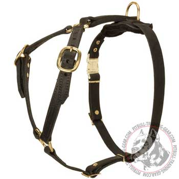 Pitbull Harness Leather with Brass Hardware for Tracking